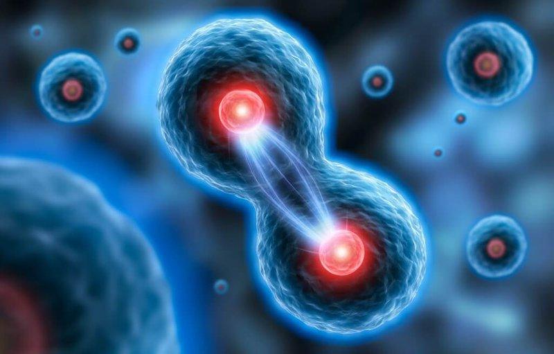 Nuôi cấy tăng sinh EX vivo tế bào diệt tự nhiên và tế bào tê gây độc từ máu ngoại vi các bệnh nhân ung thư phổi