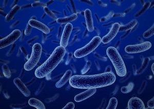 Một loại trực khuẩn thuộc nhóm Shigella