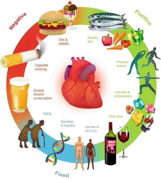 11 nguy cơ bệnh tim mạch hàng đầu có thể bạn chưa biết