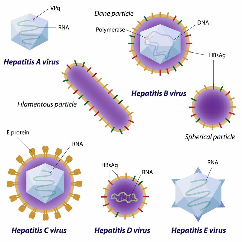 Bạn có biết sự khác nhau giữa các bệnh viêm gan virus A, B, C, D, E?