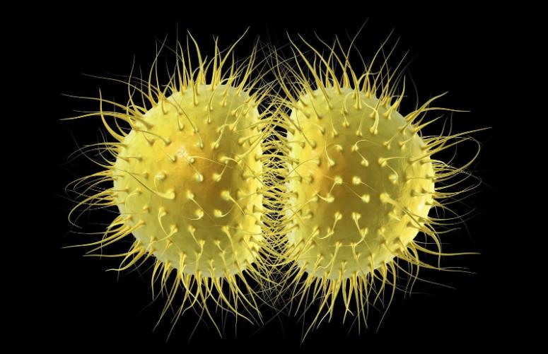 Cần phát hiện sớm vi khuẩn bệnh lậu để được điều trị đúng hướng hiệu quả
