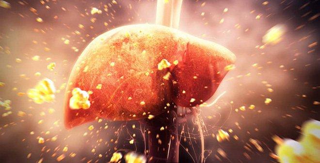 Vai trò và chức năng của men gan