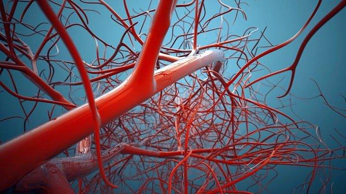 Hệ động mạch