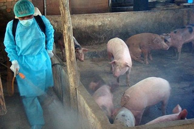 Vệ sinh chuồng trại để phòng chống dịch tả lợn Châu Phi