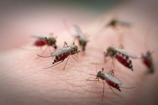Vì sao nước dừa tốt cho người bệnh sốt xuất huyết?
