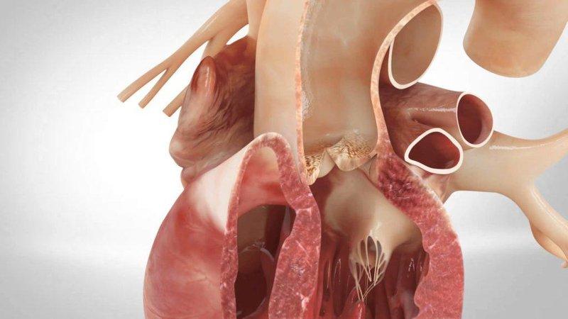 Động mạch chủ