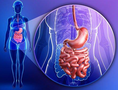 Dạ dày ruột