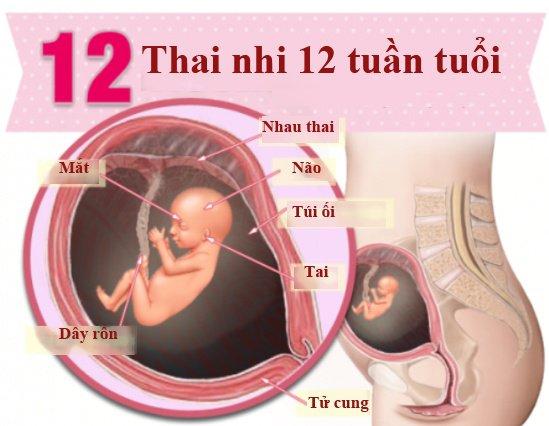 qua-trinh-phat-trien-cua-thai-nhi-3-thang-dau-3