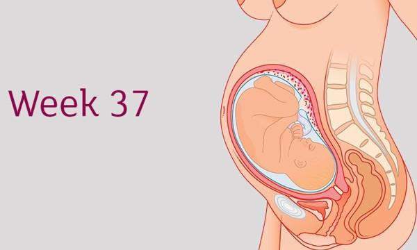 Sự phát triển của thai nhi tuần 37