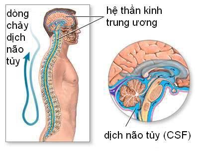Dịch não tủy