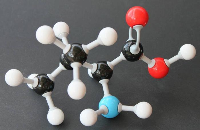 Acid amin Valine có tác dụng gì