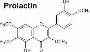 Hormone Prolactin là gì?