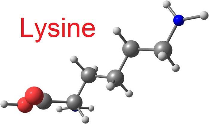 Lysine là gì? Lợi ích và tác dụng phụ