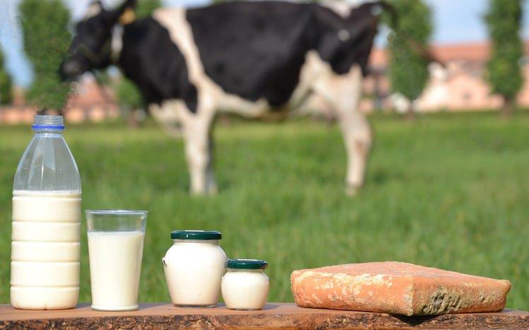Dị ứng đạm sữa bò
