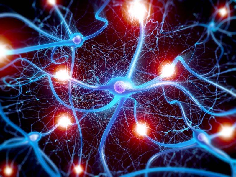 Dây thần kinh dẫn truyền cảm giác và vận động thế nào? | Vinmec