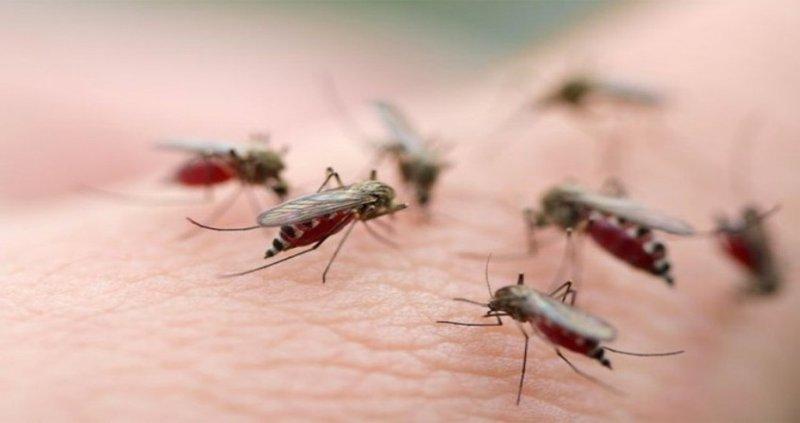 Sốt xuất huyết hoành hành: Cách diệt muỗi triệt để