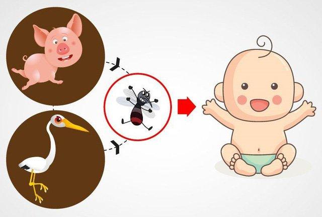 Cách tốt nhất để phòng ngừa viêm não Nhật Bản