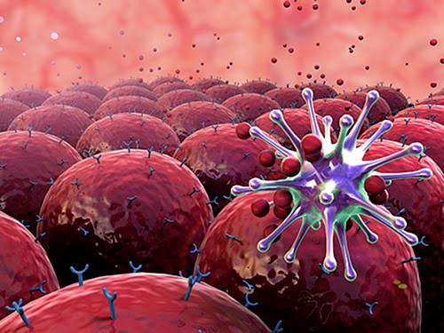 Tế bào lympho T: Những điều cần biết | Vinmec