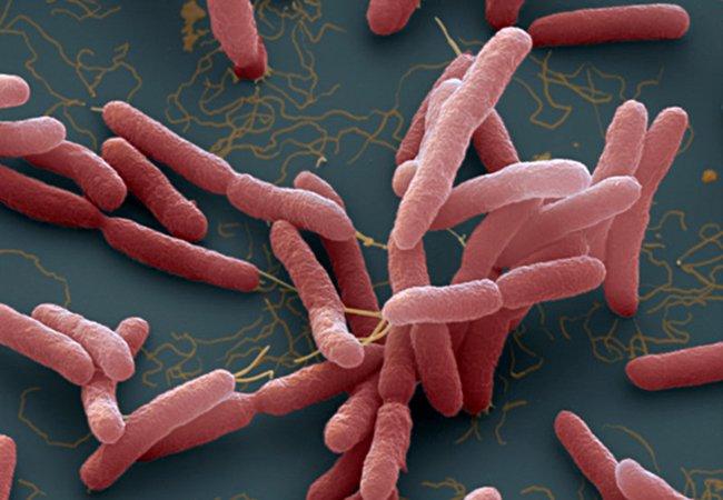 Vi khuẩn ăn thịt người là gì