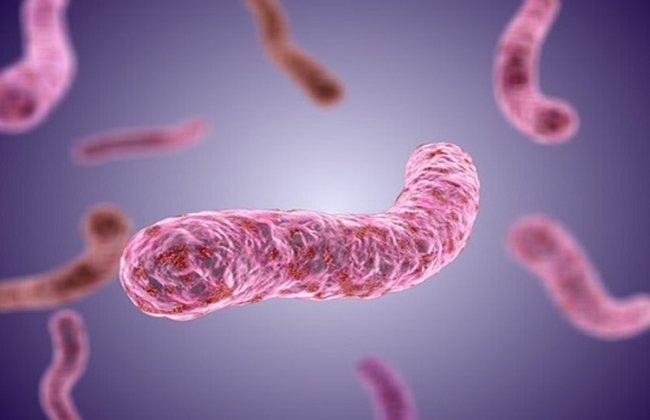 Vi khuẩn Whitmore có mức độ nguy hiểm cao