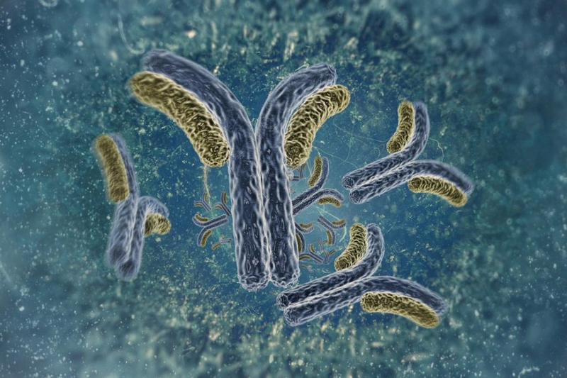 Kháng nguyên, kháng thể