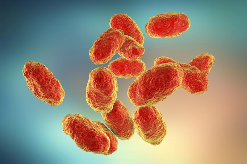 Vi khuẩn Hib gây bệnh gì?