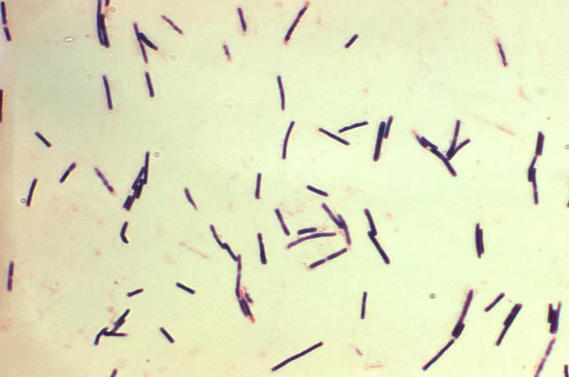 Vi khuẩn kỵ khí clostridium difficile