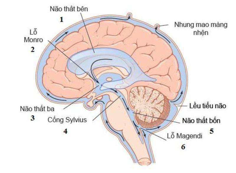 Hệ thống dịch não tủy