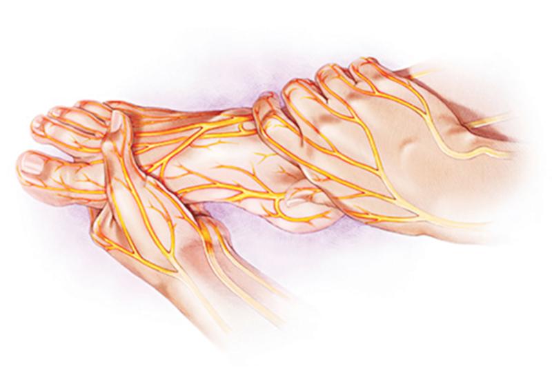 Dây thần kinh ngoại biên