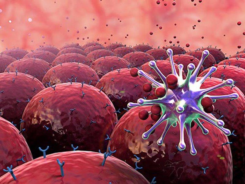 Tế bào miễn dịch