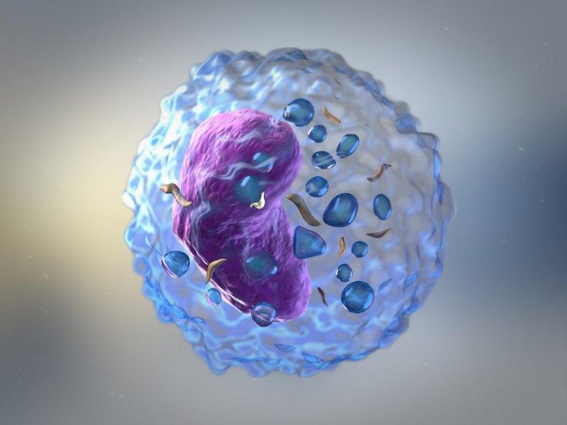 Các tế bào diệt tự nhiên (Natural killer cell - NK)