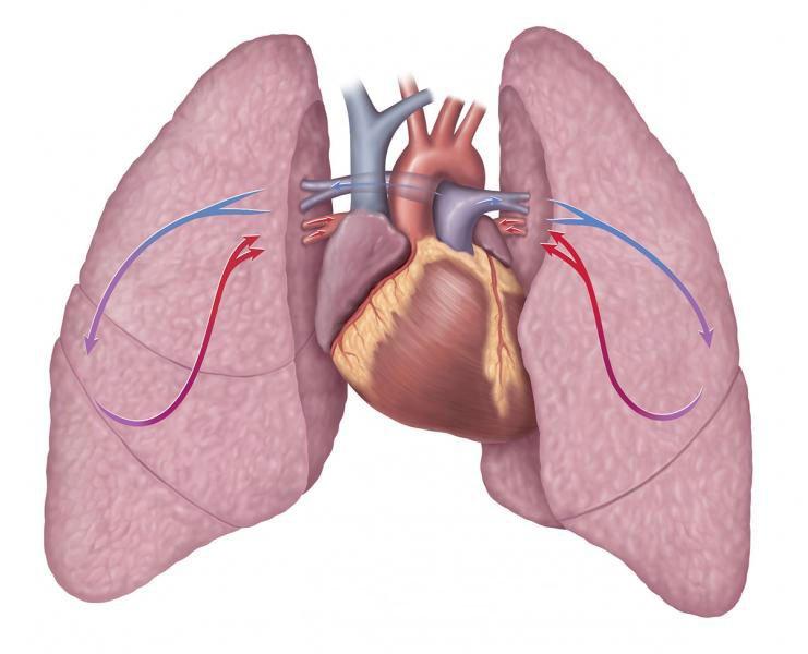 Tuần hoàn phổi