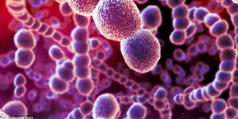 liên cầu khuẩn