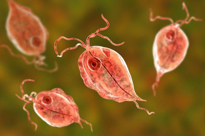 ký sinh trùng là gì
