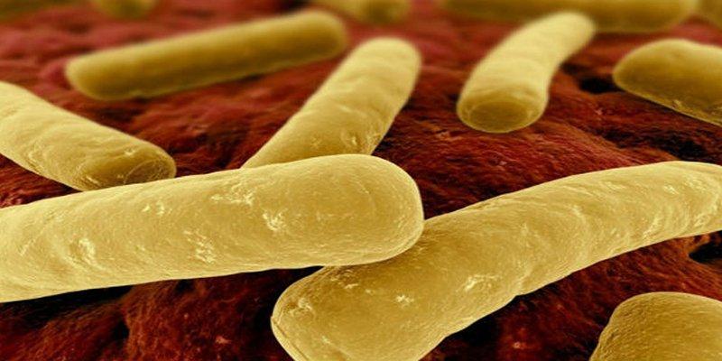 Nhiễm Clostridium Difficile