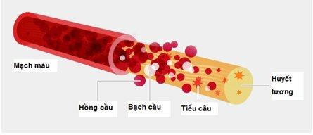 Xuất huyết giảm tiểu cầu