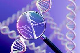 Chẩn đoán phôi tiền làm tổ cho bệnh lý đơn gen