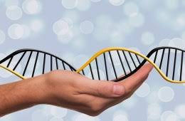 gen đơn PARK-SNCA