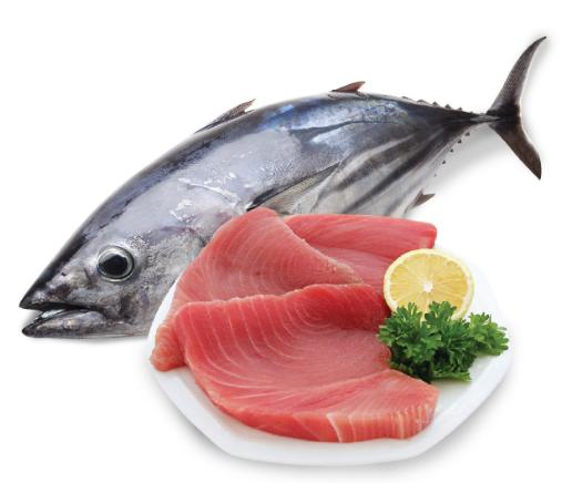 Bạn có thể ăn cá ngừ khi mang thai? | Vinmec
