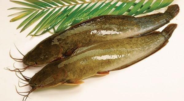 Cá trê: Chất dinh dưỡng, lợi ích với sức khỏe | Vinmec