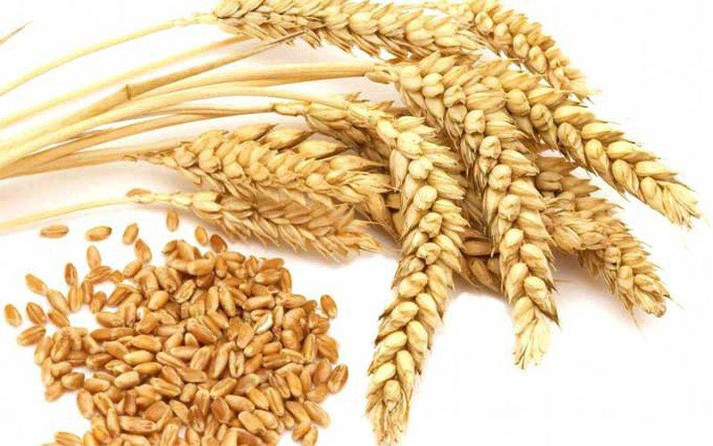 Bia được nấu chủ yếu từ lúa mạch nha