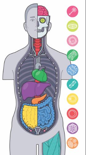 tế bào cơ thể