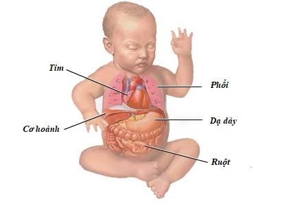 hệ tiêu hoá ở trẻ em