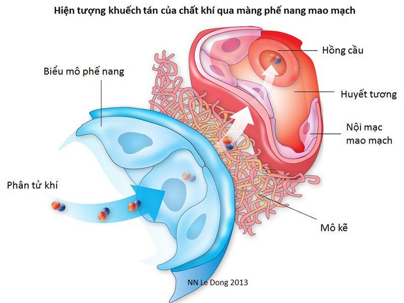 đo khả năng khuếch tán khí qua màng phế nang mao mạch