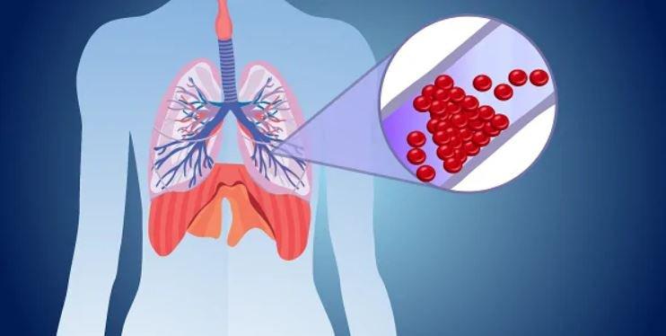 Máu lưu thông qua phổi
