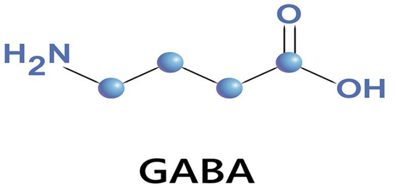 GABA là chất gì?   Vinmec