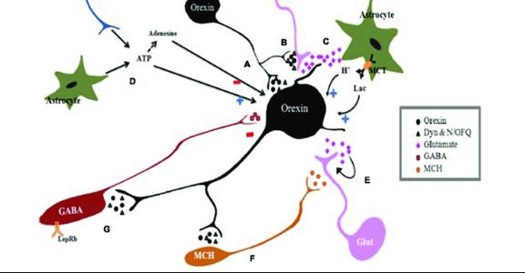 chất dẫn truyền thần kinh
