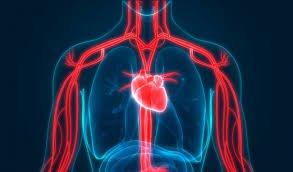 thực phẩm tăng cường lưu thông máu