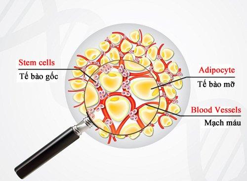 tế bào gốc từ mô mỡ