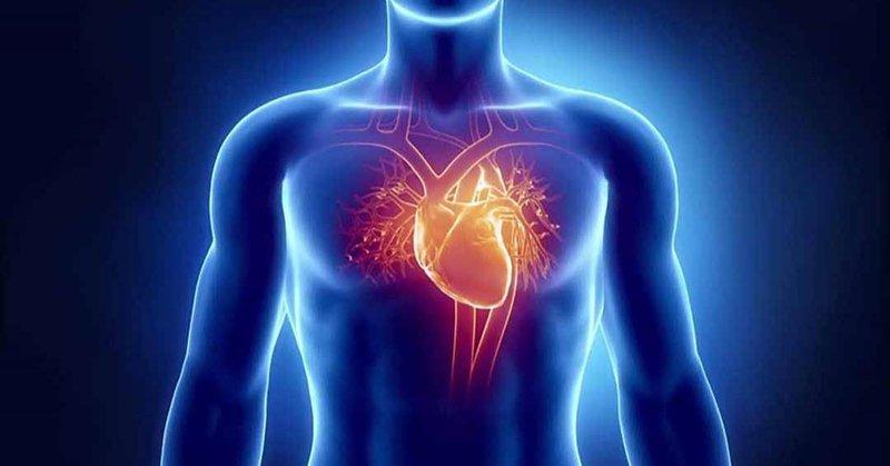 tim mạchk